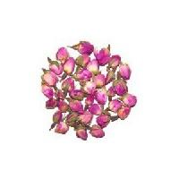 Rose rose bouton