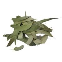 Eucalyptus globulus, feuille entière