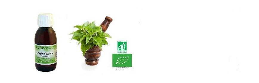Plantes Fraîches sauvages et BIO Extrait Fluide E.F.G.M